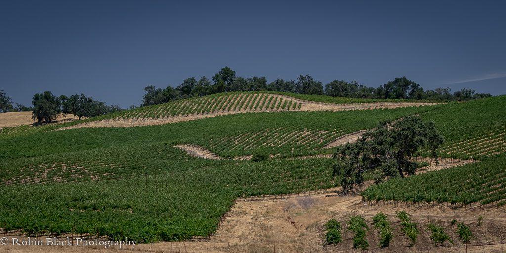 Estate Vines