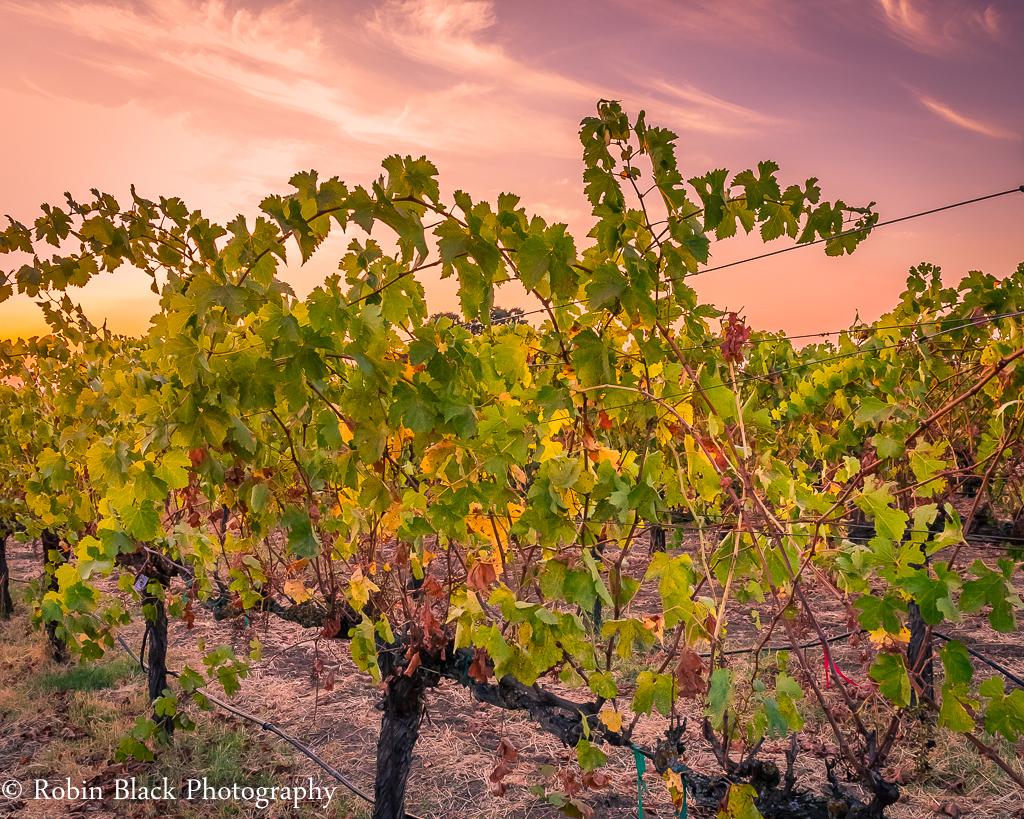 Post-Harvest Sunset